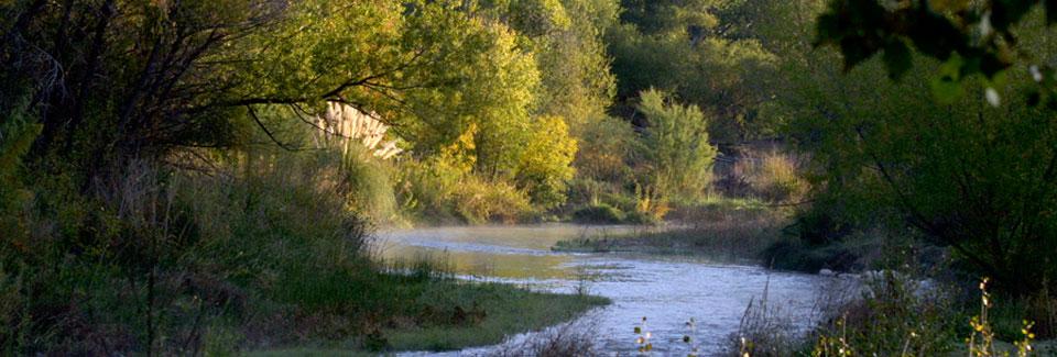 The Verde River - Cottonwood, Arizona